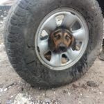 Salvan a una cachorra atrapada en una rueda