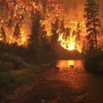Incendio forestal fuera de control cerca de Port Macquarie, en Australia