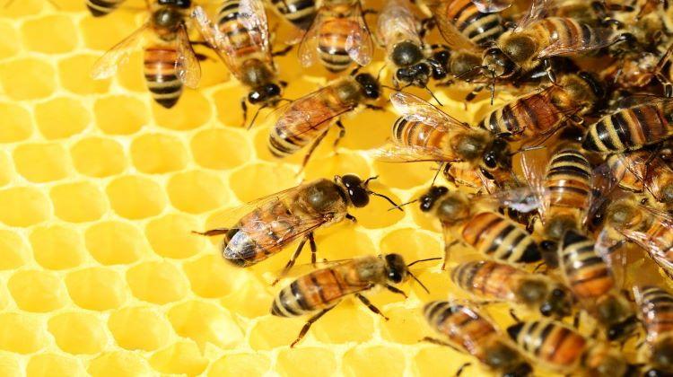 Al menos 60 estudiantes atacados por un grupo de abejas en Tripura (India)