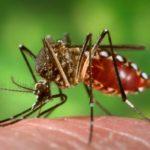 La fiebre del Dengue. Evita la picadura de mosquito